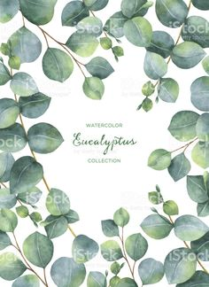 236x324 Watercolor Eucalyptus Round Leaves And Branches Set. Hand Painted