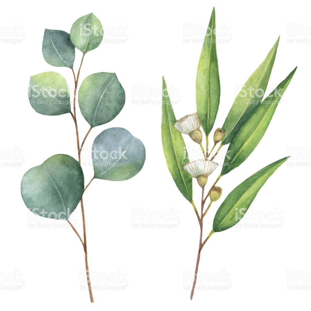 1024x1024 Watercolor Hand Painted Set With Eucalyptus Leaves And Branches