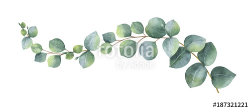 500x220 Watercolor Vector Wreath With Green Eucalyptus Leaves And Branches