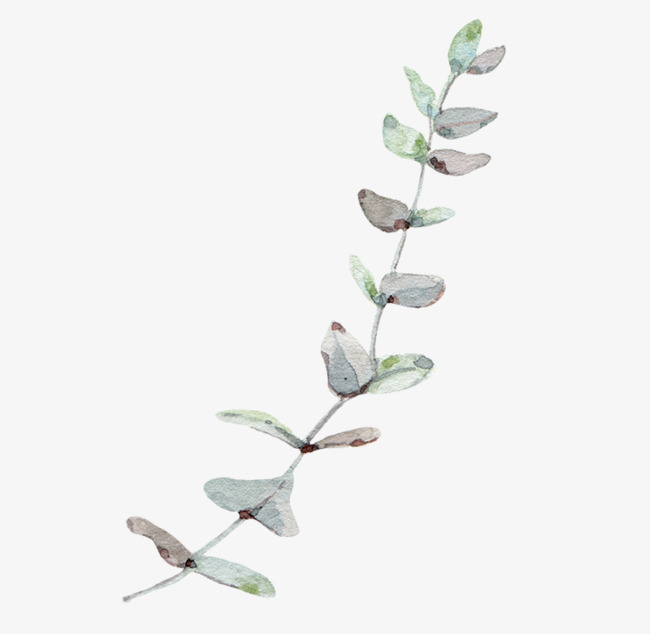 650x634 Eucalyptus Png Images Vectors And Psd Files Free Download On