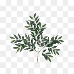 260x261 Eucalyptus Png, Vectors, Psd, And Clipart For Free Download Pngtree