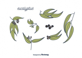 285x200 Eucalyptus Leaves Free Vector Graphic Art Free Download (Found