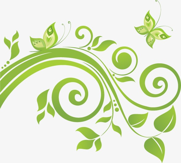 591x530 Vine Leaves In Spring, Spring, Leaves, Vine Png And Vector For