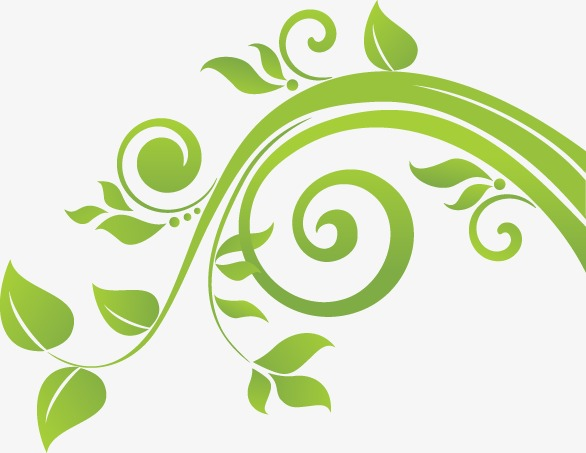 586x453 Vine Leaves In Spring, Vine Vector, Spring Vector, Spring Png And