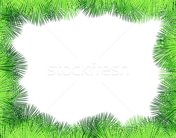 600x471 Palm Fringe Vector Illustration Robert Adrian Hillman (Tawng