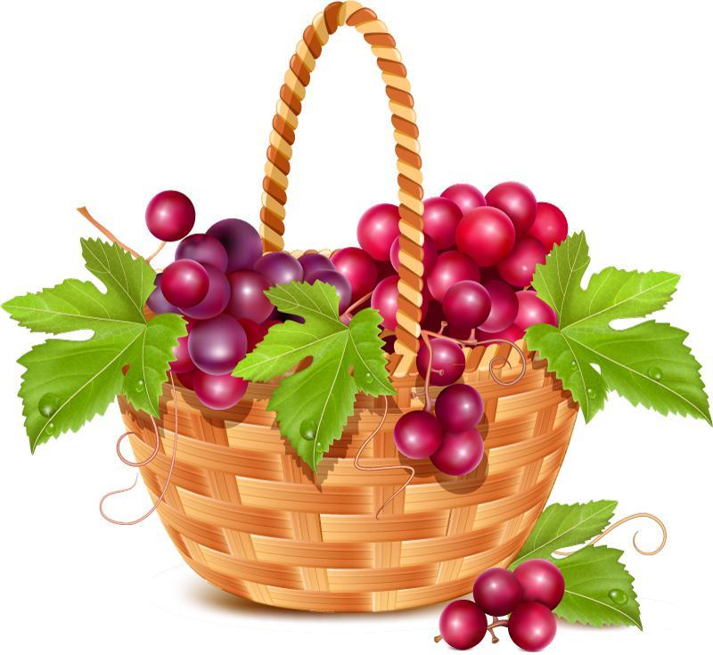 800x735 Fruit Basket Of The Grape Vector [Eps]