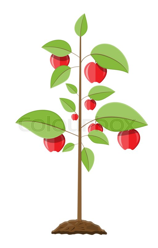 512x800 Decorative Fruit Tree. Growth Of Plant, From Sprout To Fruit