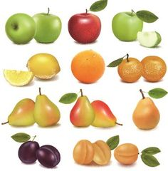 Fruit Vector Free