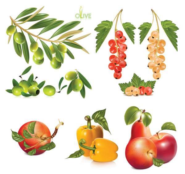 600x564 Vector Fruit Free Vector Fruit Download