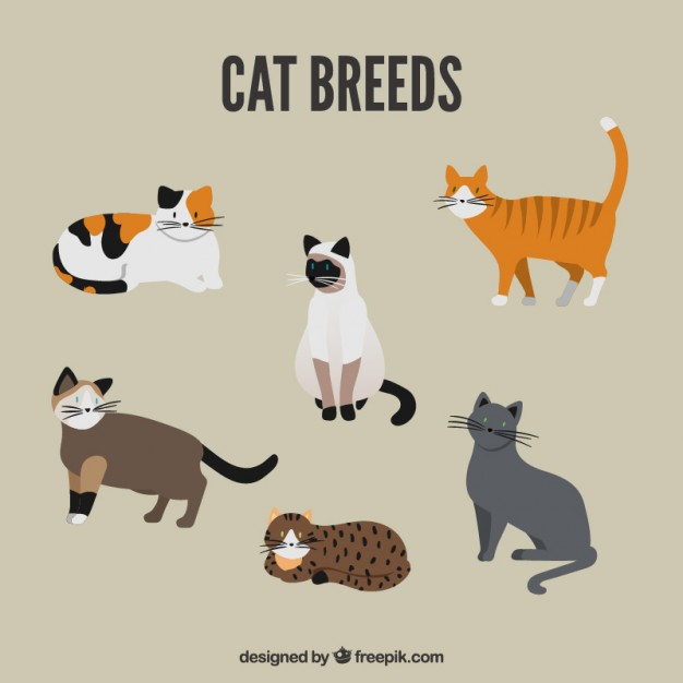626x626 Cute Cat Breed Pack Vector Free Download