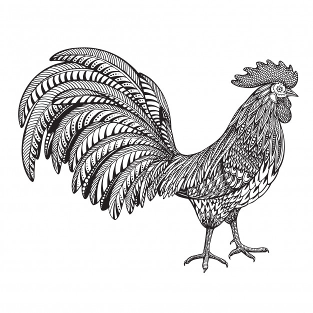 626x626 Black And White Hand Drawn Vector Illustration Of Fiery Rooster