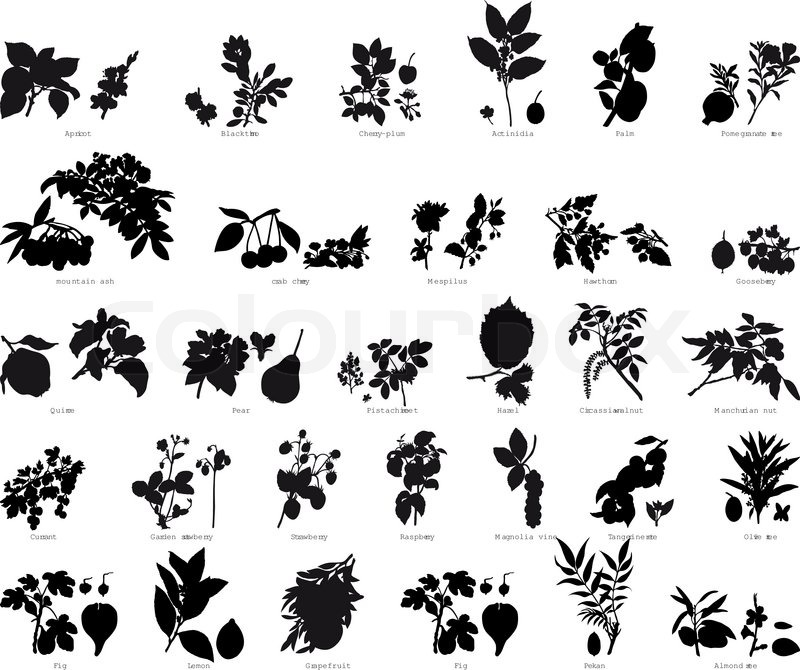 800x670 Collection Of Different Garden Vector Silhouettes Of Plants