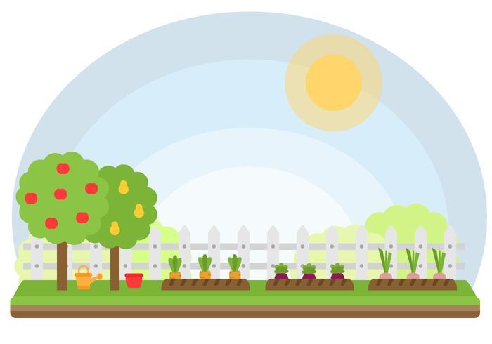 700x490 Vegetables Garden Vector