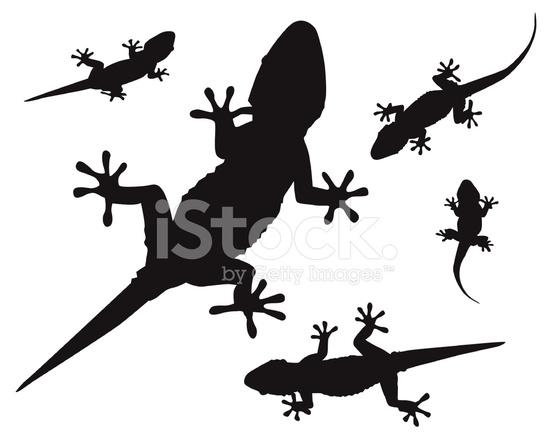 552x439 Gecko (Vector) Stock Vector