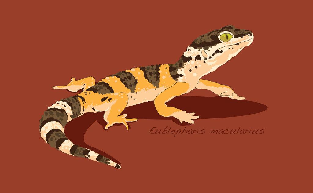 1024x632 Leopard Gecko Vector By Insanus Draconem