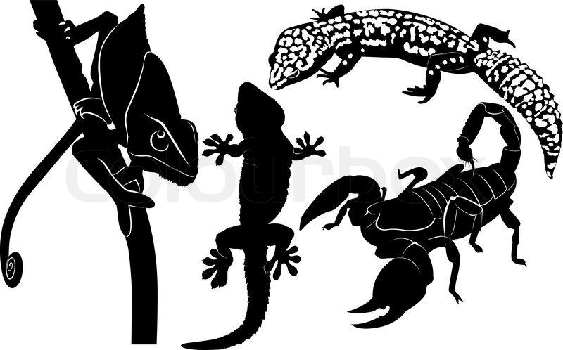 800x498 Scorpion Gecko Chameleon Stock Vector Colourbox