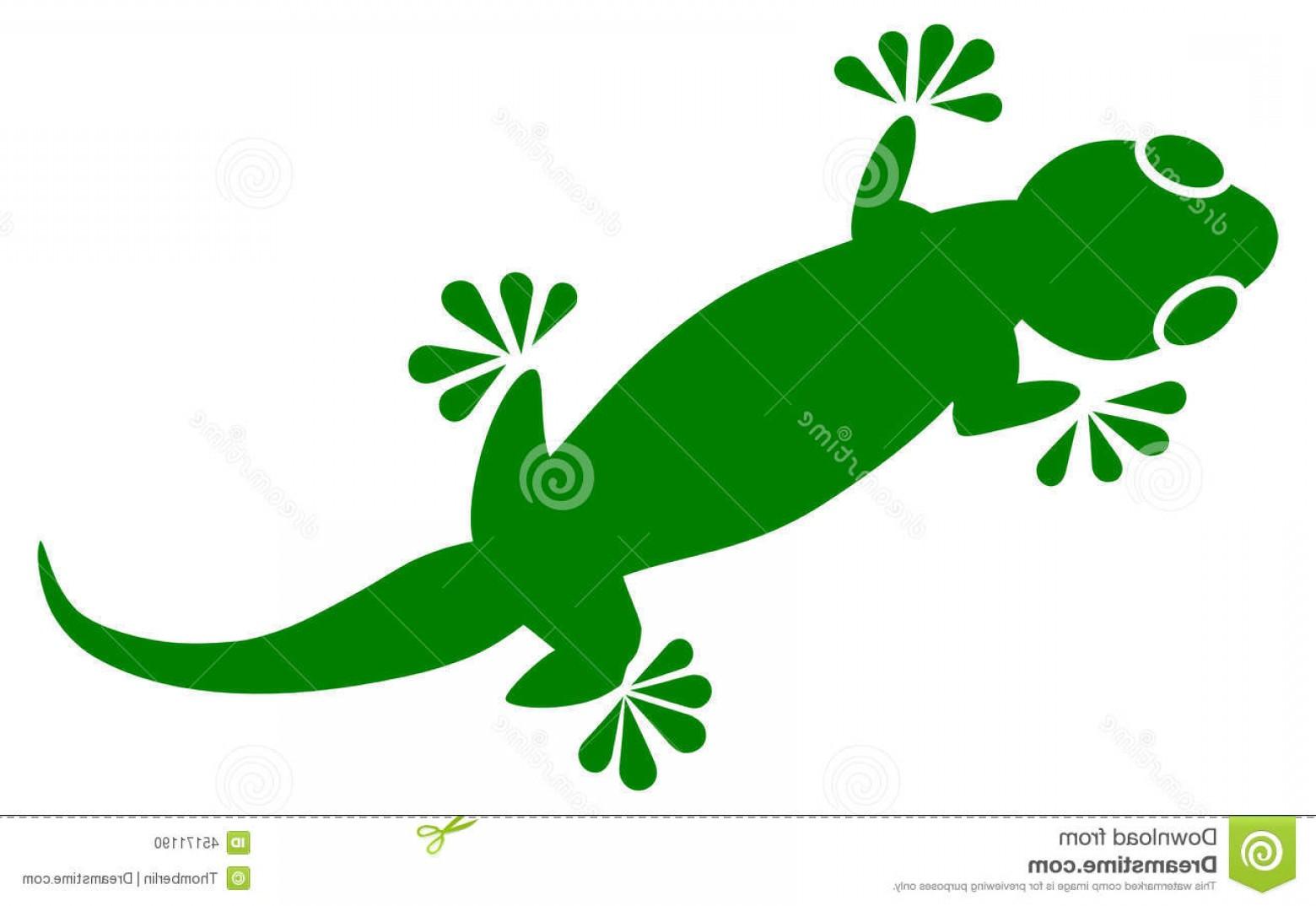 1560x1074 Stock Illustration Gecko Vector Geckos Found Warm Climates
