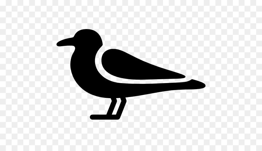 900x520 Bird Gulls Computer Icons Clip Art