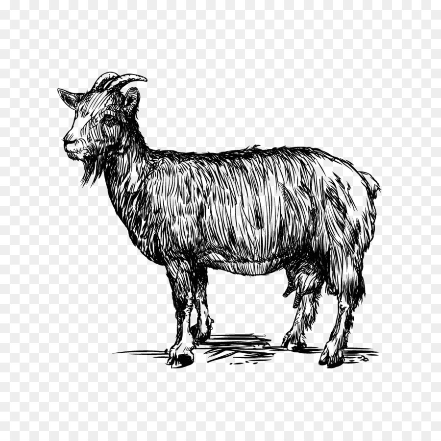 900x900 Sheep Goat Cattle Zeus Caprinae