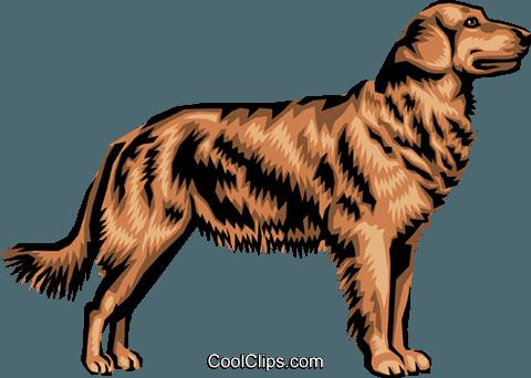 480x342 Golden Retriever Royalty Free Vector Clip Art Illustration