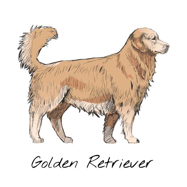 626x626 Golden Retriever Vectors, Photos And Psd Files Free Download
