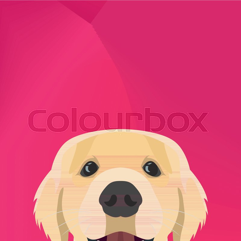 800x800 Illustration Dog Golden Retriever Looking Over Wall For The