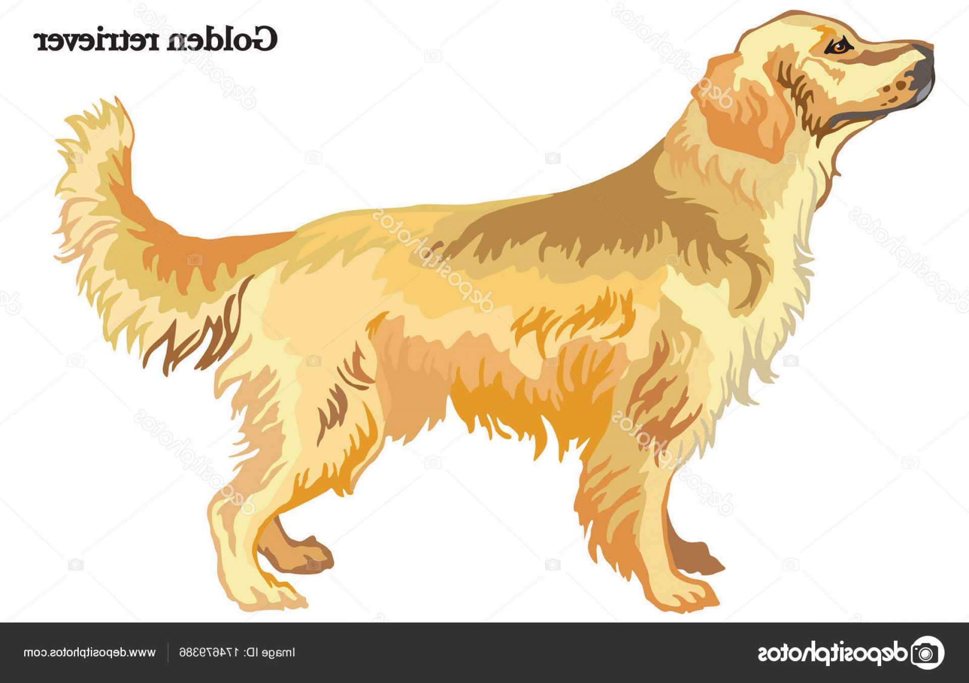 1920x1354 Stock Illustration Golden Retriever Vector Illustration Arenawp