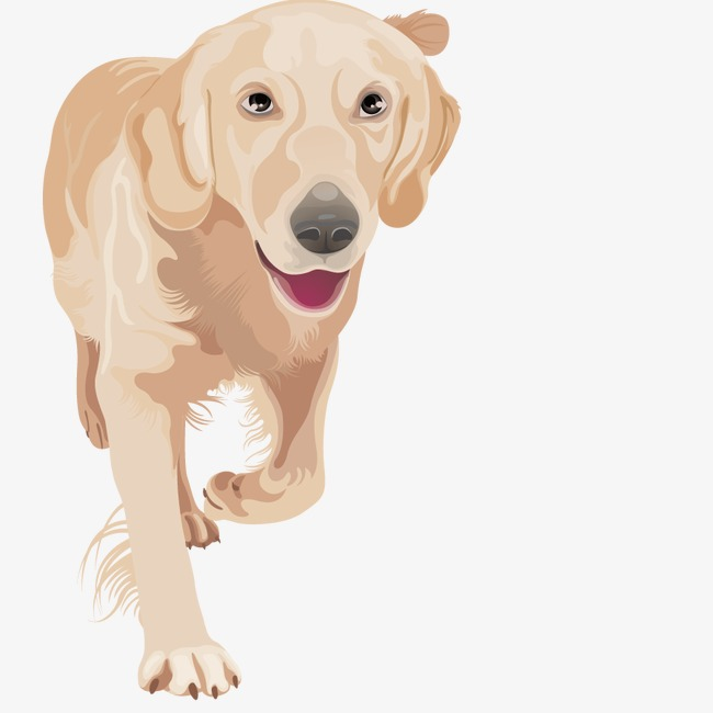 650x650 Vector Golden Retriever Puppy, Animal, Hand Painted, Dogs Png And
