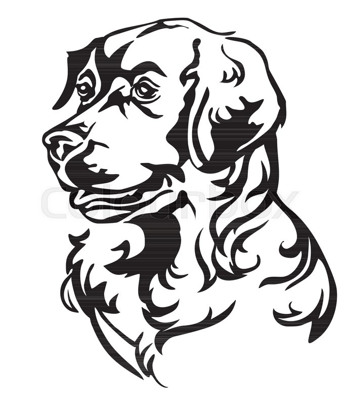 686x800 Decorative Portrait In Profile Of Dog Golden Retriever, Vector