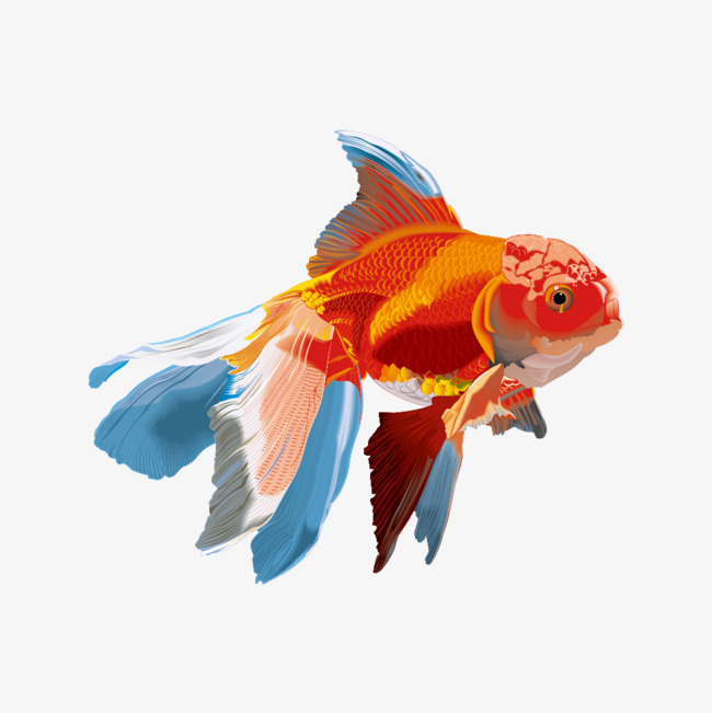 650x651 Watercolor Goldfish Vector Material, Watercolor Vector, Watercolor