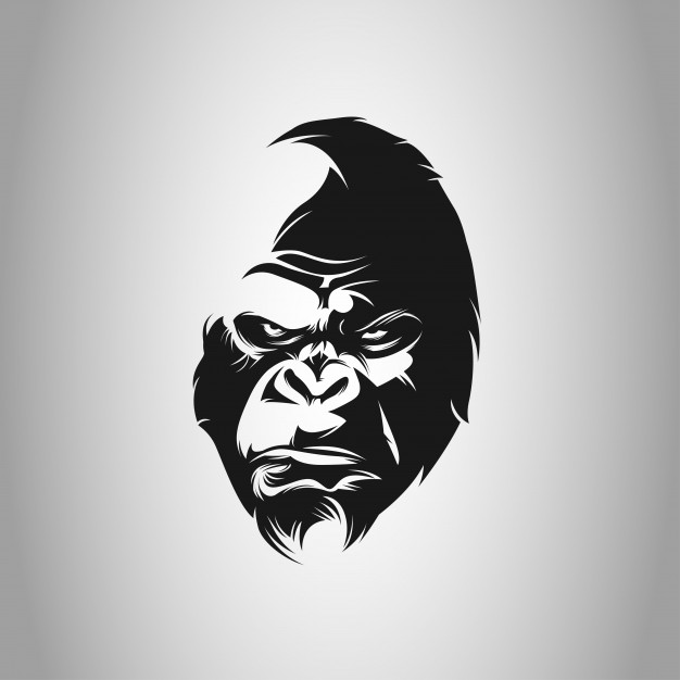 626x626 Gorilla Vectors, Photos And Psd Files Free Download