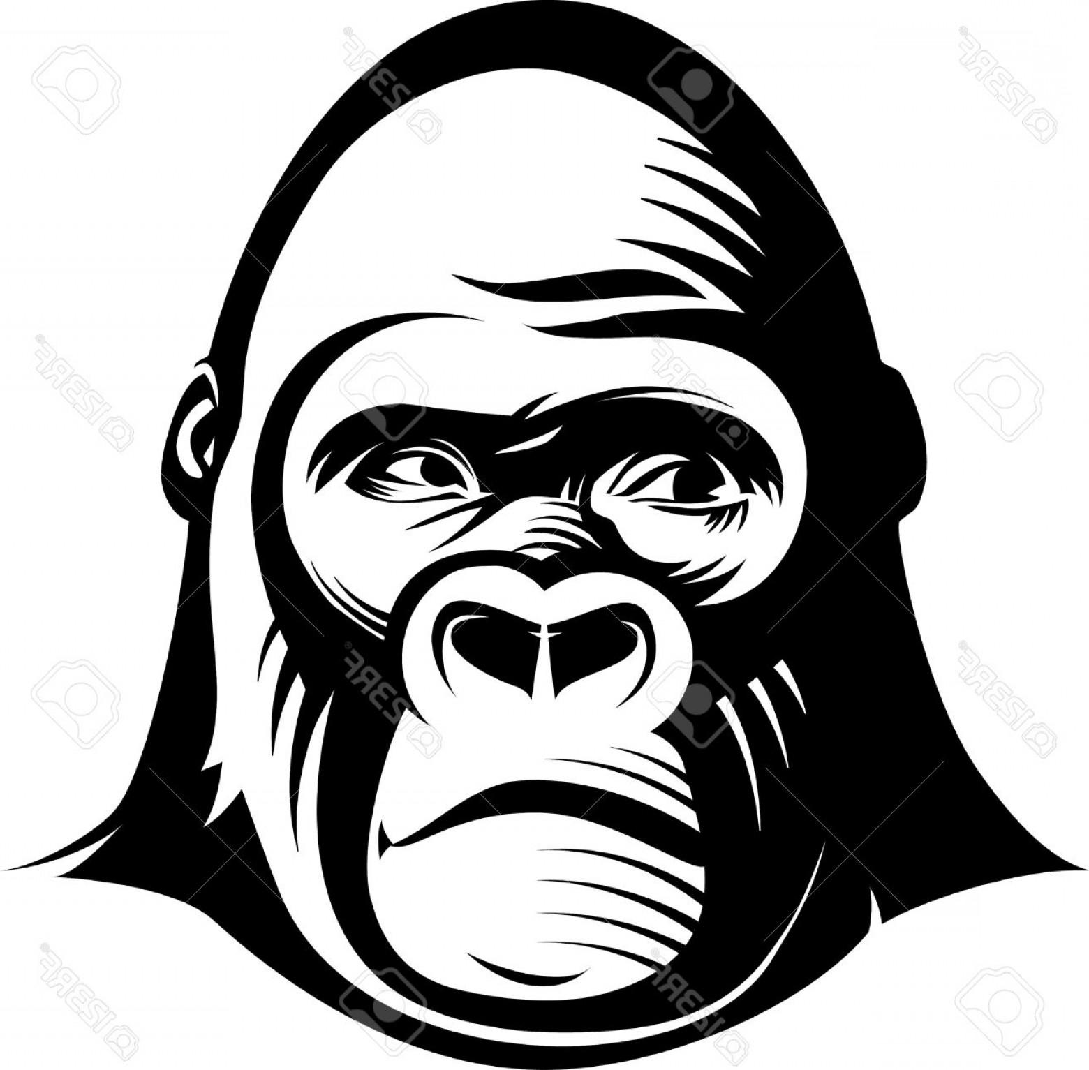 1560x1533 Angry Gorilla Face Clip Art Shopatcloth
