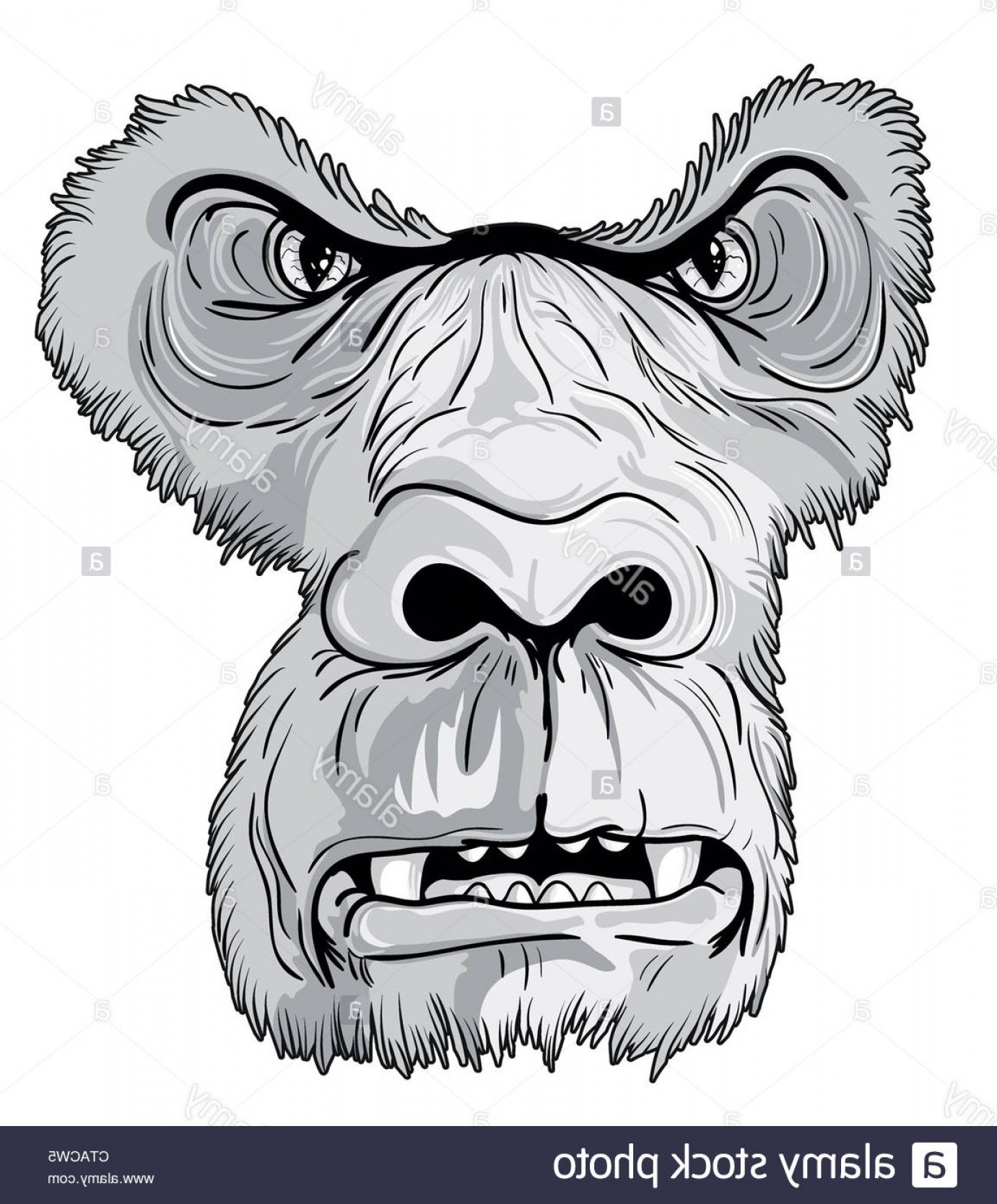 1381x1668 Stock Photo Vector Vintage T Shirt Design With Gorilla Face Arenawp