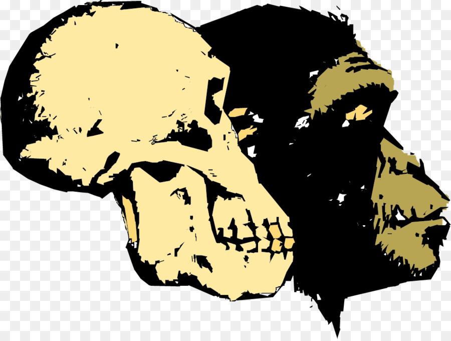 900x680 Ape Human Evolution Homo Sapiens Creationism