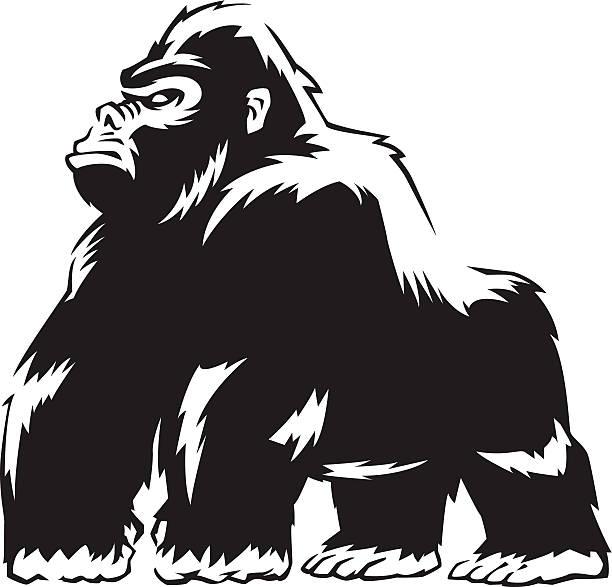 612x587 Mountain Gorilla Clipart Amp Mountain Gorilla Clip Art Images