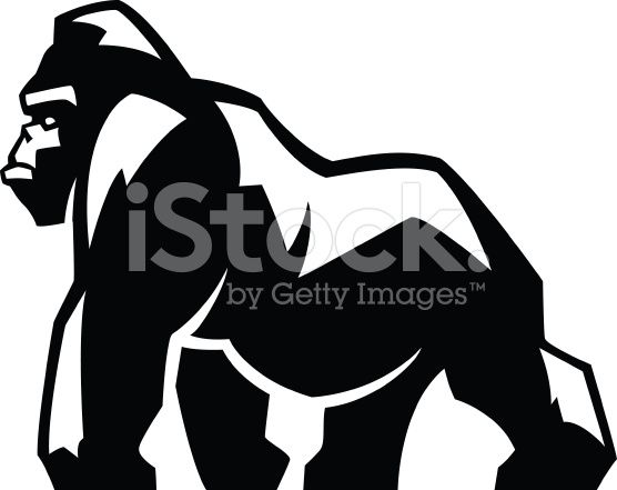 556x441 Gorilla Illustration Illustrations Vector Art