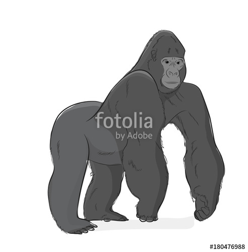 492x500 Gorilla Vector Illustration Stock Image And Royalty Free Vector