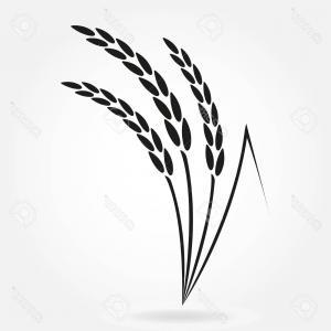 300x300 Photostock Vector Rice Crop Symbol Rice Or Wheat Ears Design