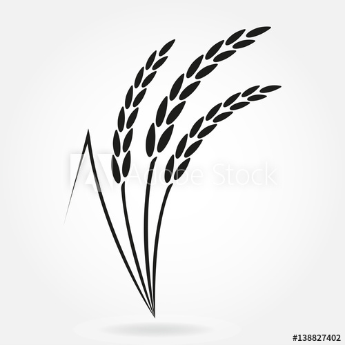500x500 Rice. Crop Symbol. Rice Or Wheat Ears Design Element. Agriculture