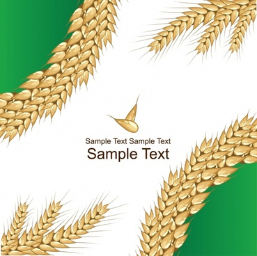 369x368 Wheat Grain Vector Free Vector Download (493 Free Vector) For