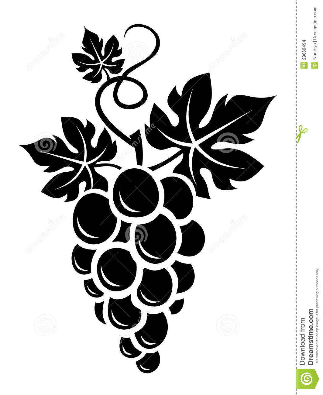 Grape Vine Vector Free