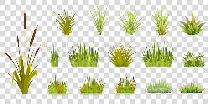 Grass Blades Vector at GetDrawings com | Free for personal use Grass