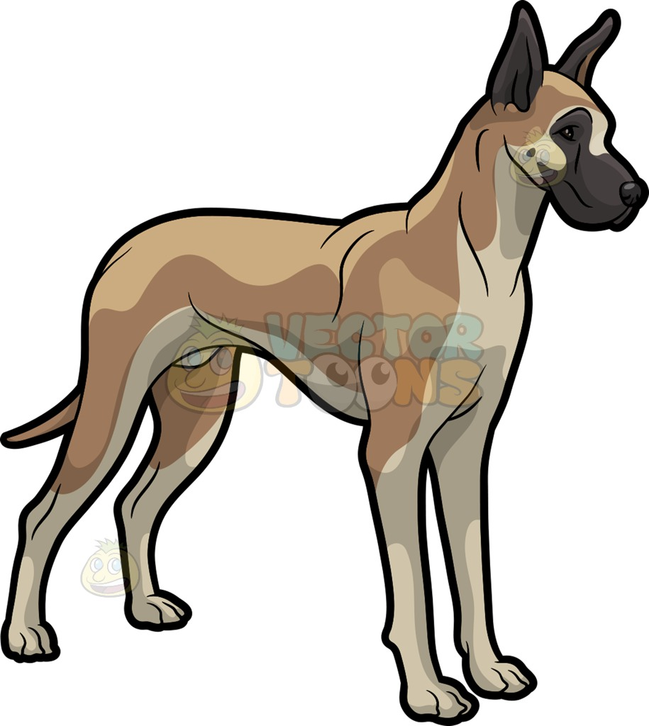 915x1024 A Beautiful Great Dane Clipart By Vector Toons