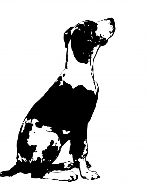 485x615 Dog Clipart Great Dane Free Stock Photo