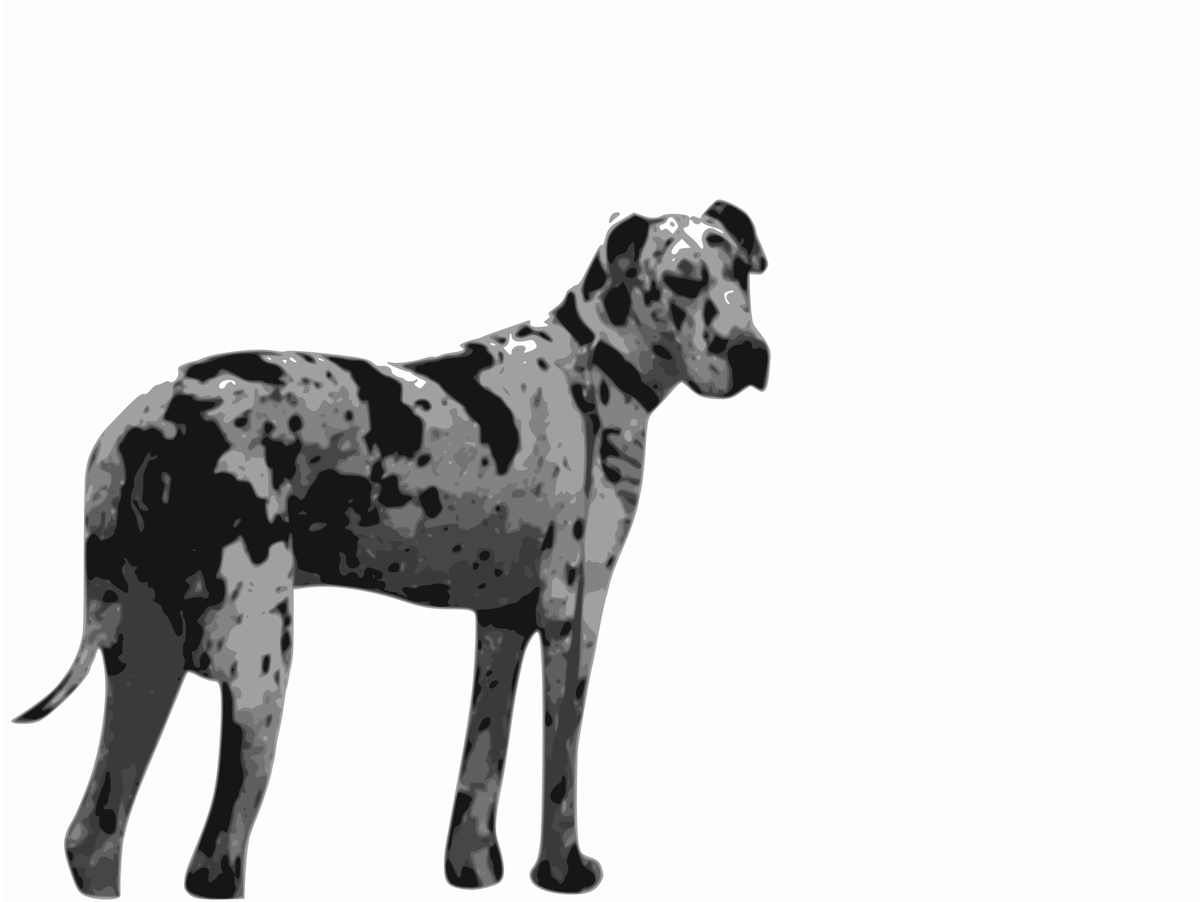 2400x1805 Great Dane Vector Clipart Image
