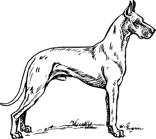 600x536 Great Dane Free Vector In Open Office Drawing Svg ( .svg ) Vector