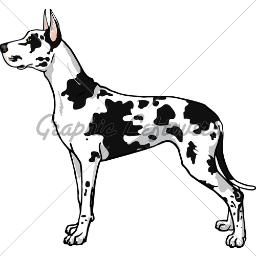 500x500 Harlequin Great Dane Gl Stock Images