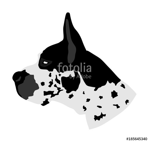500x477 Portrait Of Great Dane Vector Illustration Isolated. Harlequin Dog
