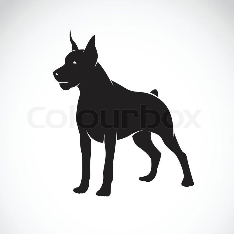 800x800 Vector Image Of An Dog (Great Dane) On White Background Stock