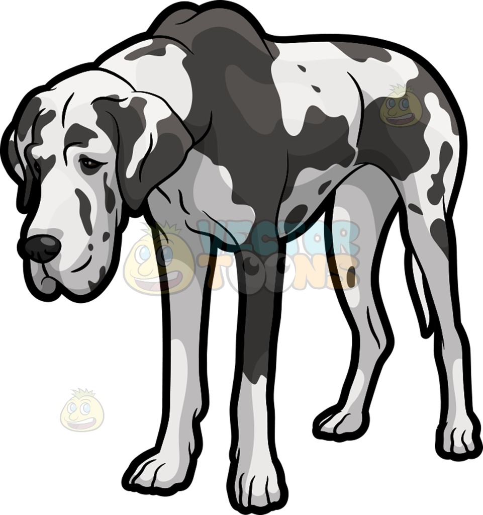 961x1024 An Exhausted Great Dane Dog Clipart By Vector Toons